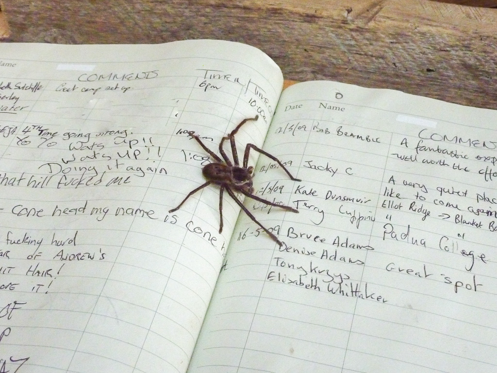 spider-in-book-great-ocean-walk