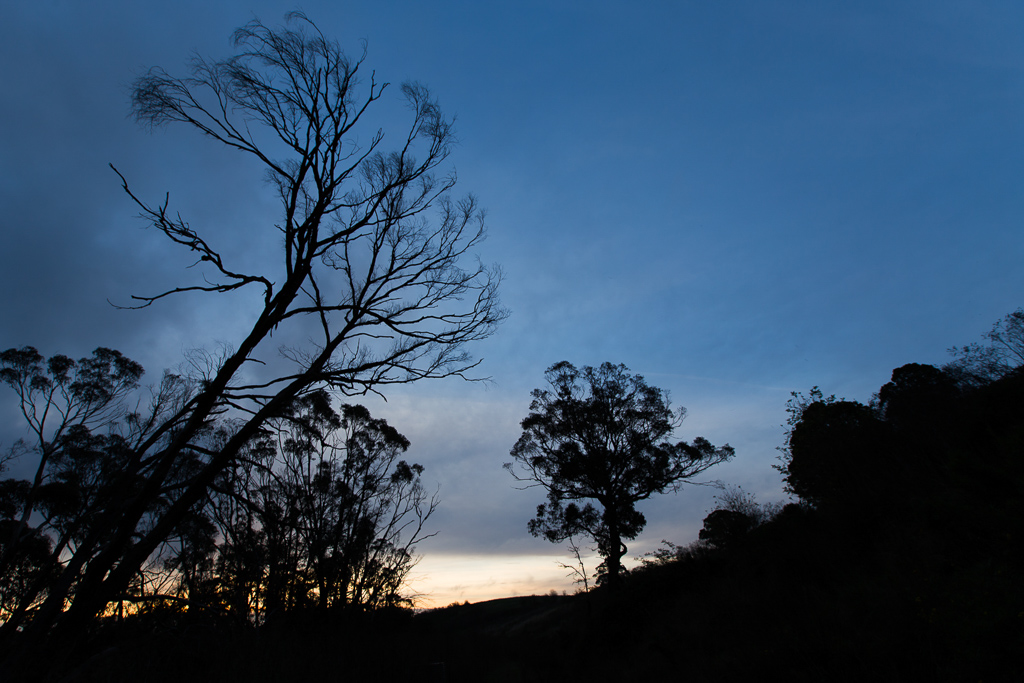 trees-silhouette-sunset-daylesford