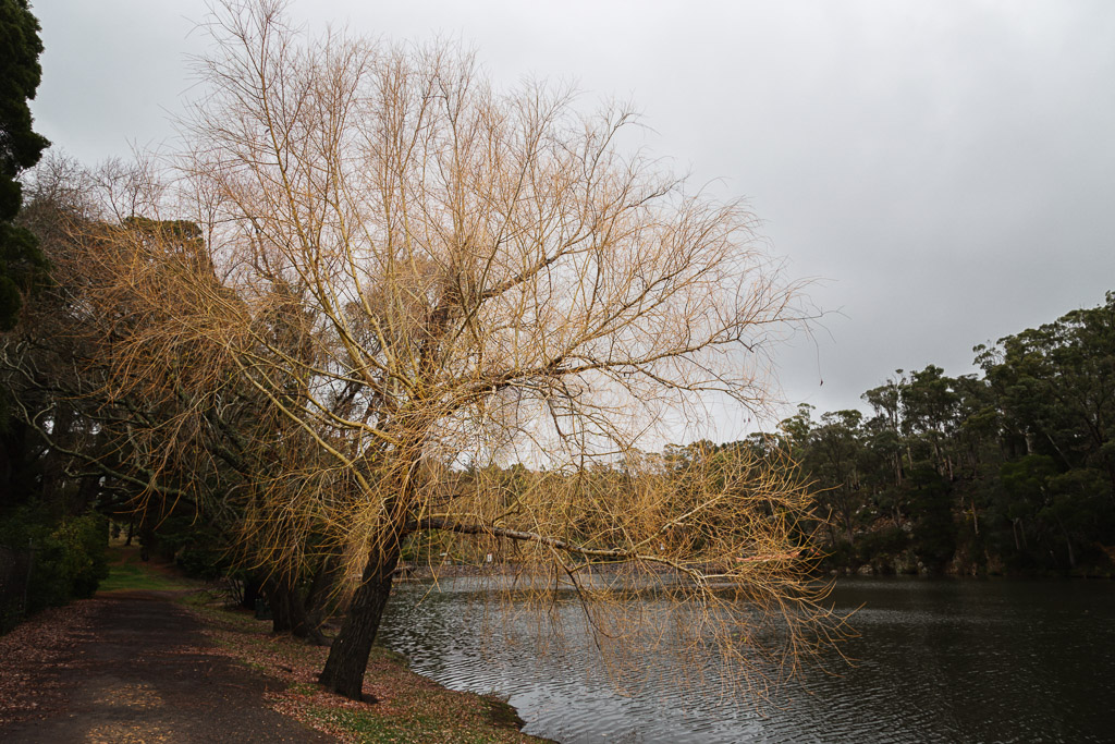 trees-lake-daylesford