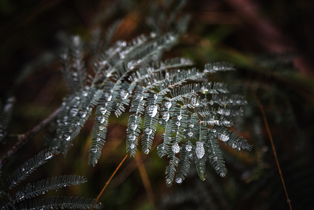 water-droplets-on-fern-branch