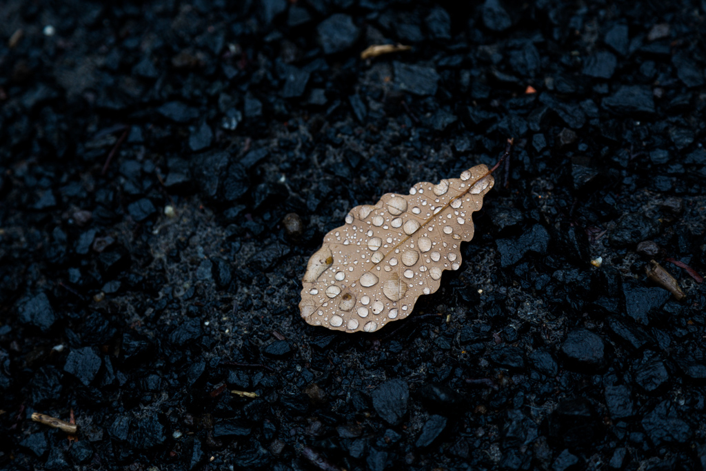 water-droplets-on-leaf