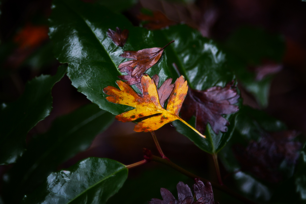 wet-yellow-green-leaves