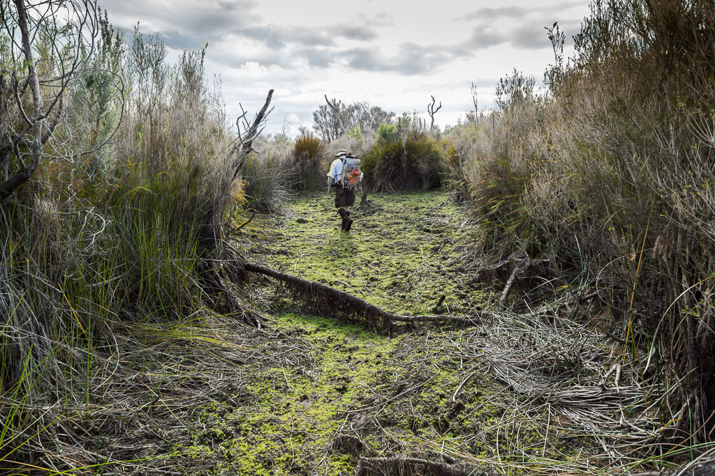 chinaman-swamp-wilsons-promontory