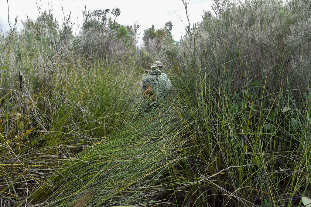 walking-chinaman-swamp-wilsons-promontory