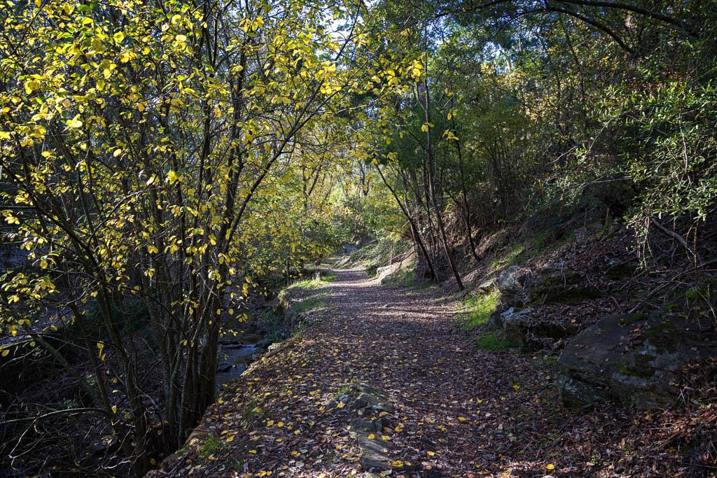 autumn-trees-daylesford