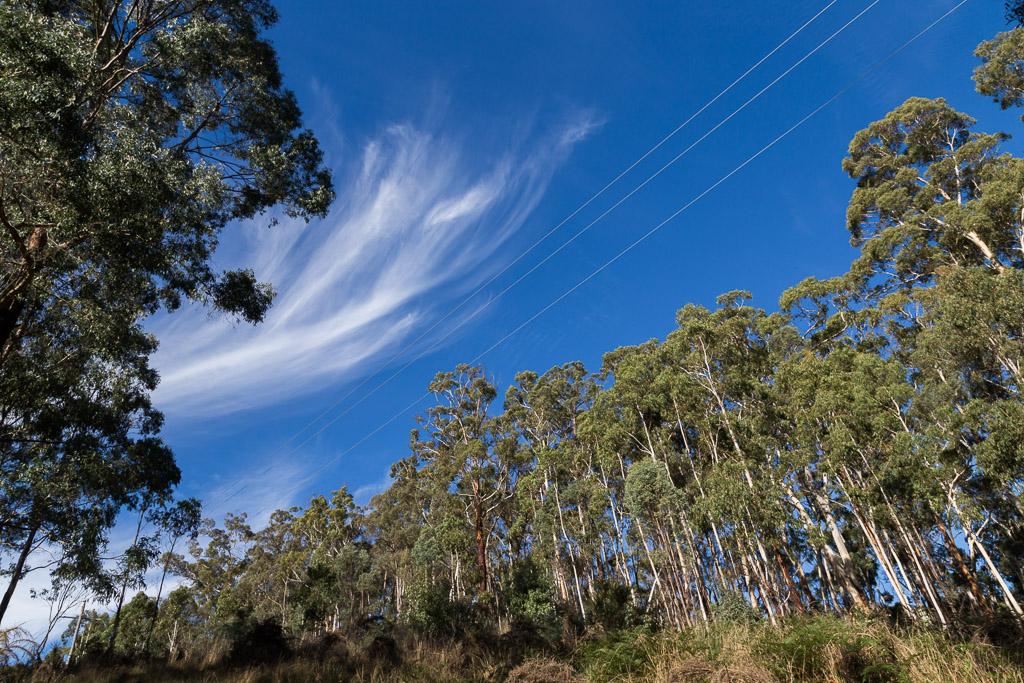 blue-sky-green-trees