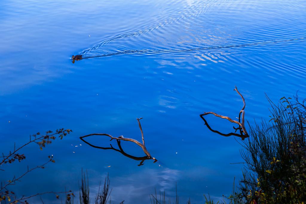 duck-lake-daylesford
