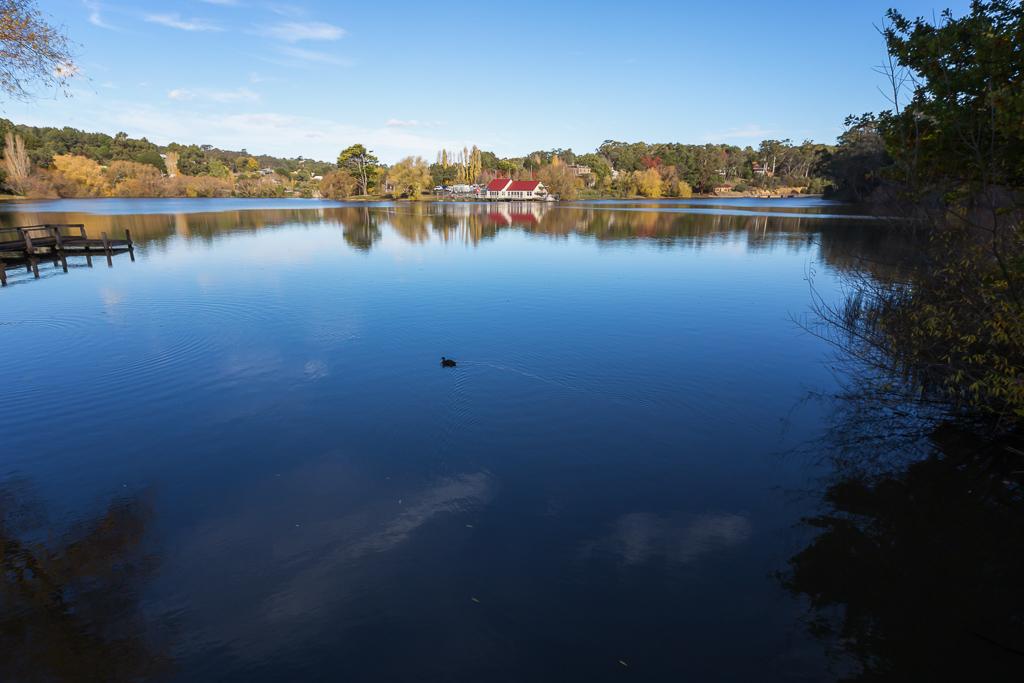 duck-on-lake-daylesford
