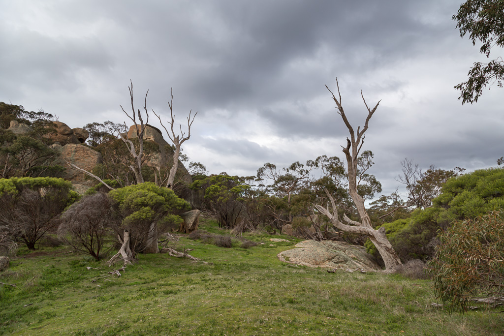 grass-trees-rocks-mount-kooyoora