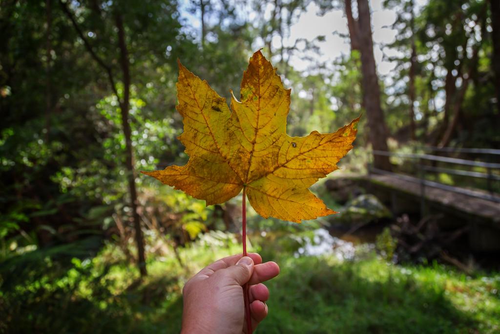holding-large-leaf
