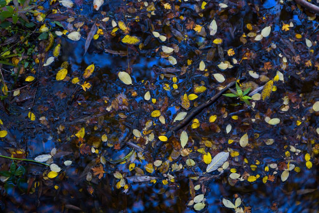 leaves-jubilee-lake-daylesford