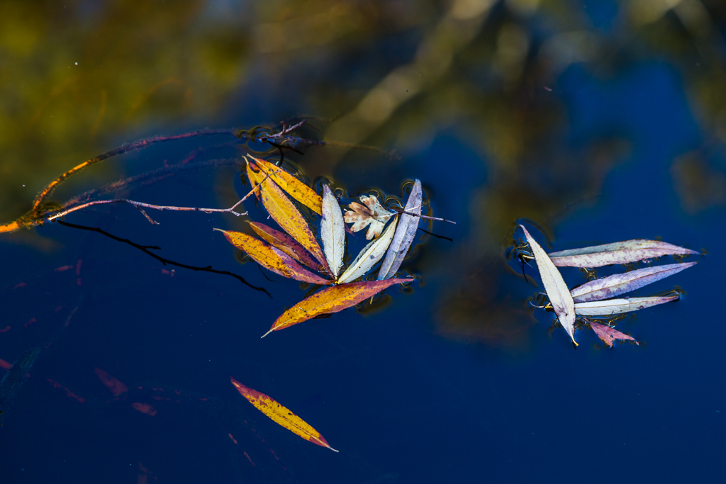 leaves-on-jubilee-lake-daylesford
