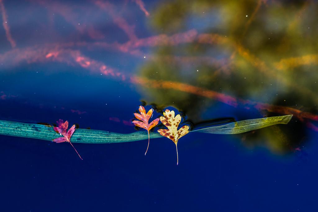 leaves-on-water