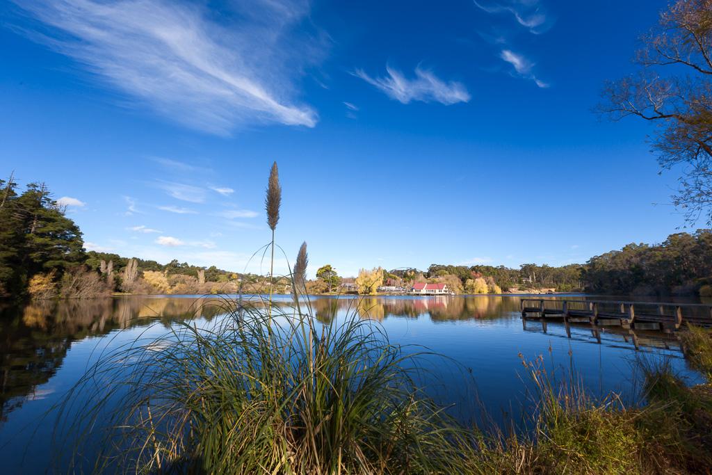 reeds-on-lake-daylesford