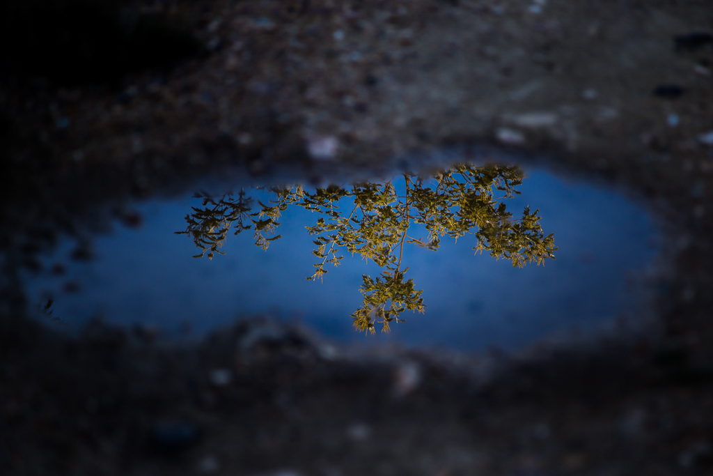 reflections-puddle