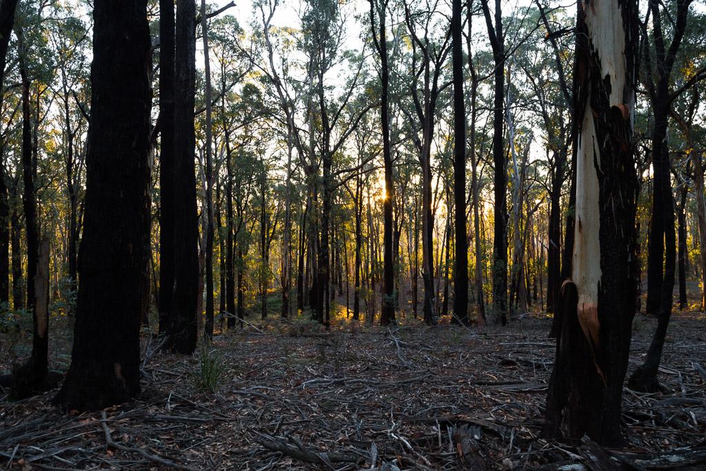 sunset-daylesford-forest