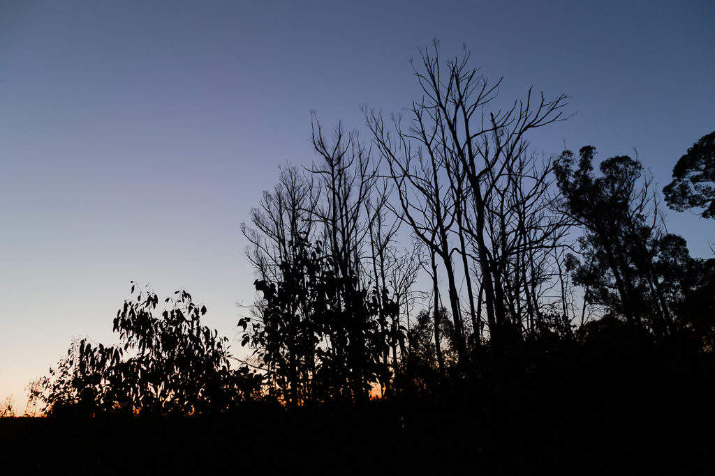 sunset-through-trees