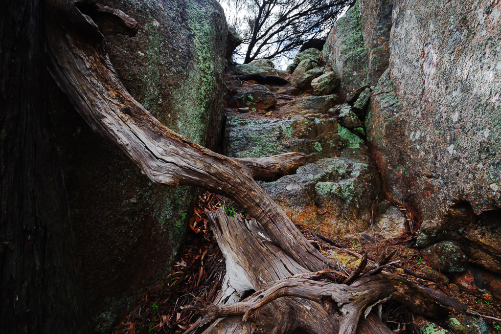 tree-branch-rocks-mount-kooyoora