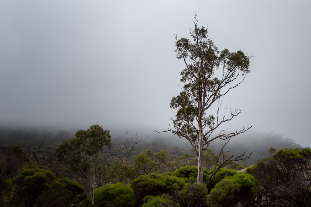 tree-in-cloud-mount-kooyoora