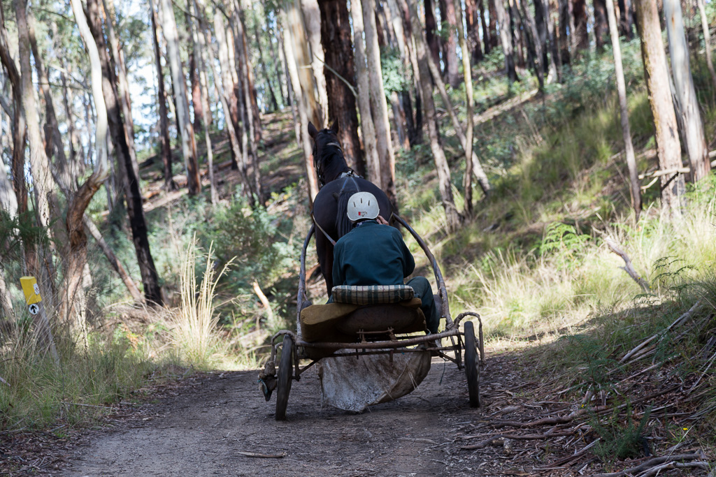 trotting-horse-daylesford-forest