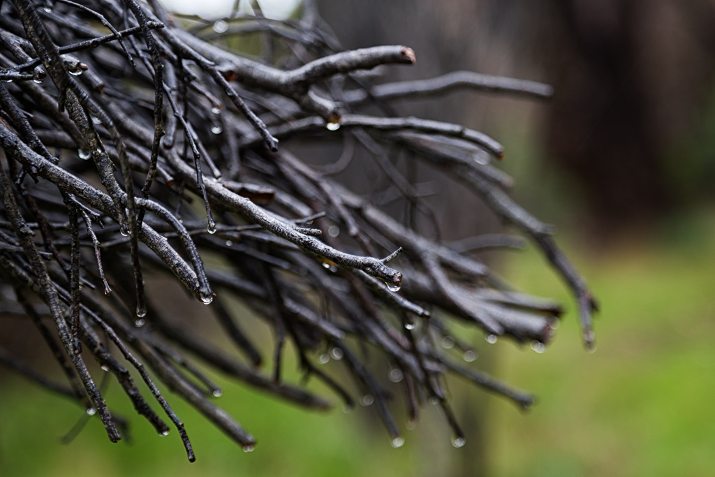 wet-branches