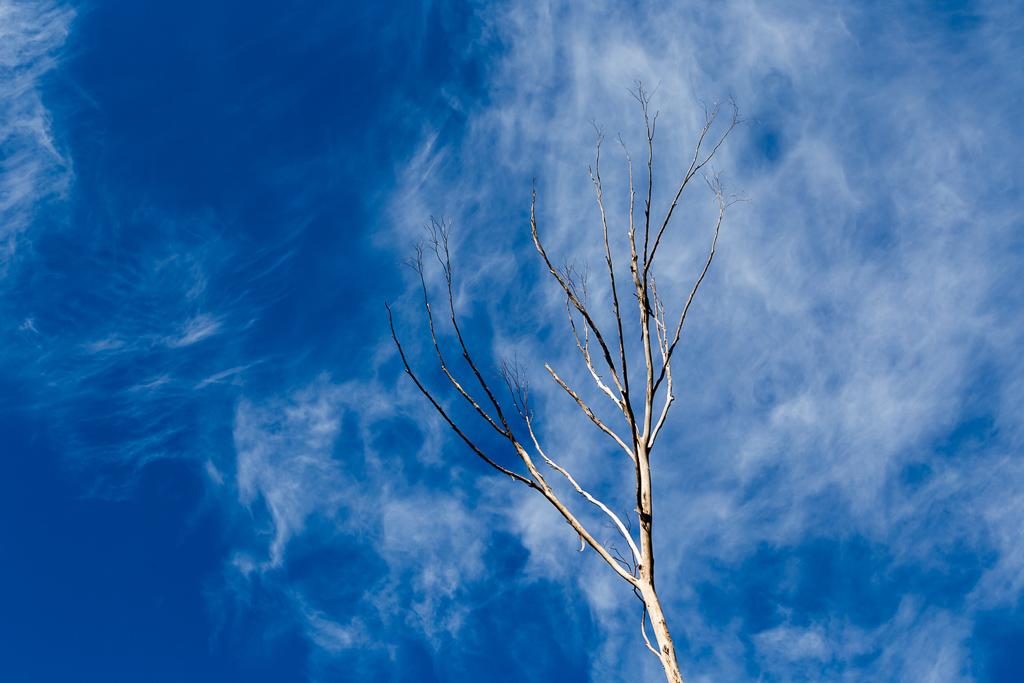 white-branch-blue-sky