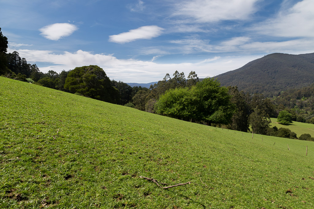 green-grass-paddock-warburton