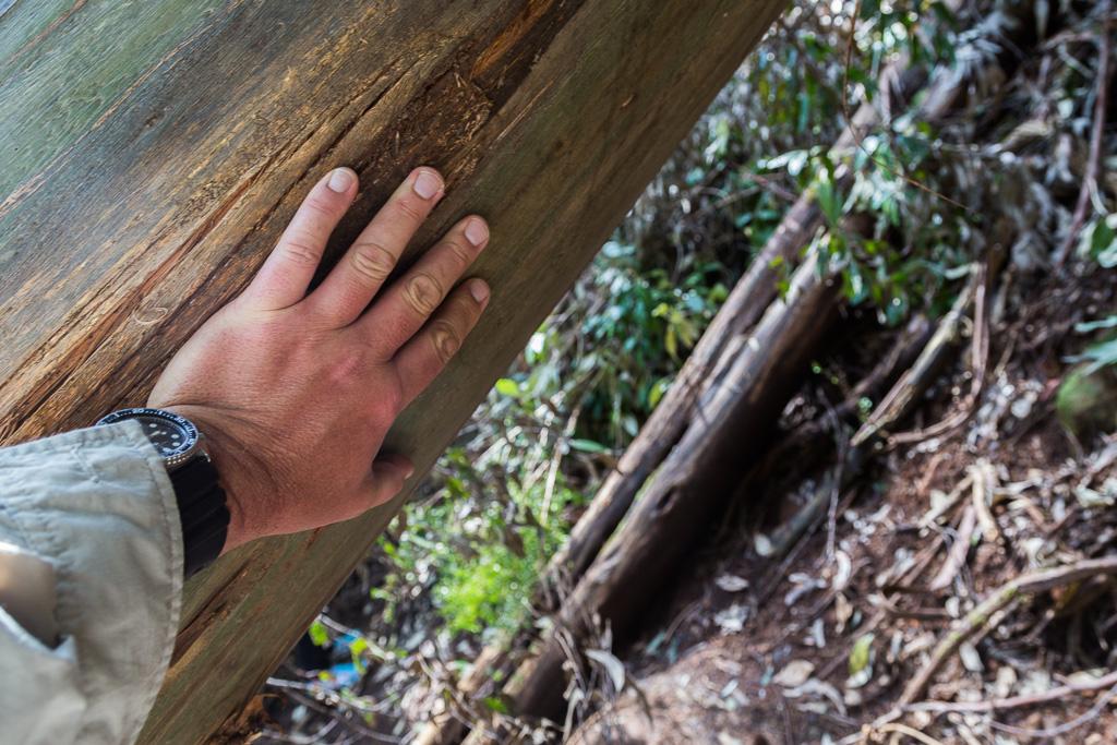 hand-on-fallen-log