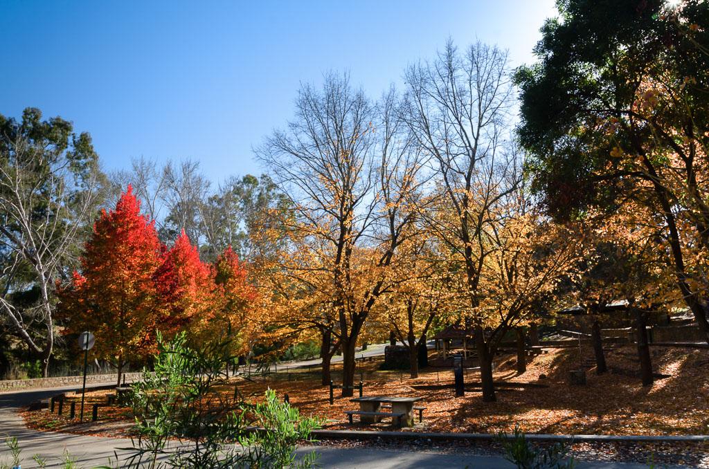 autumn-vaughan-mineral-springs
