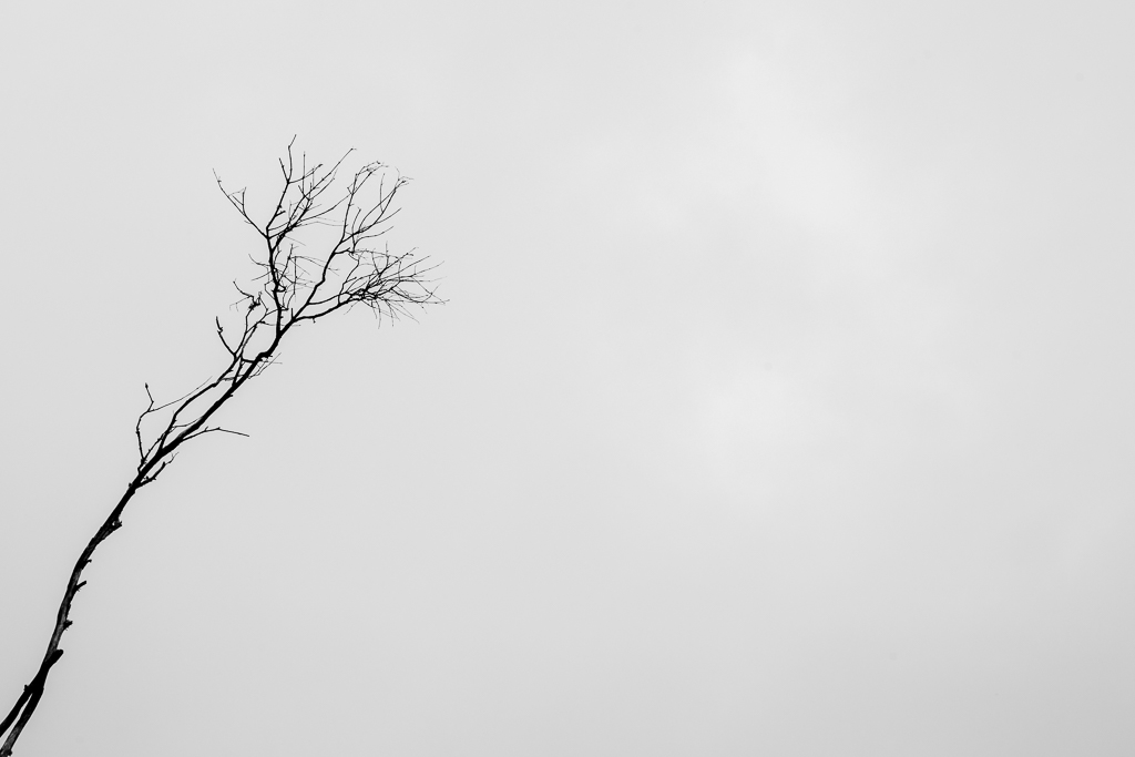 branch-against-white-sky