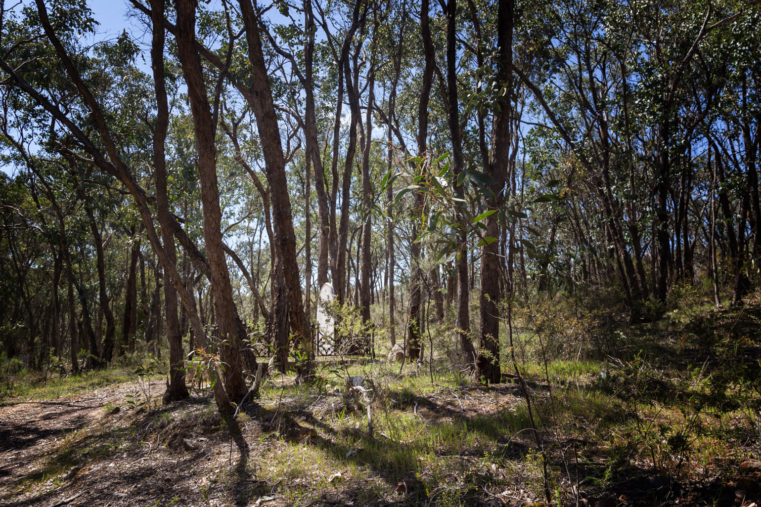 escott-grave-goldfields