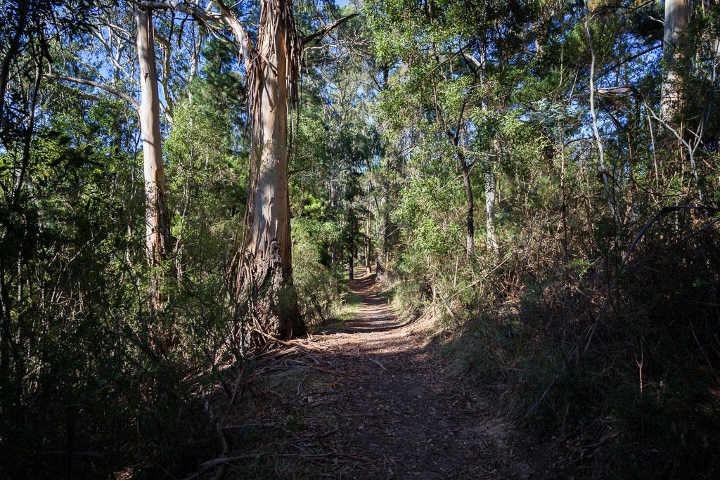 goldfields-track-creswick