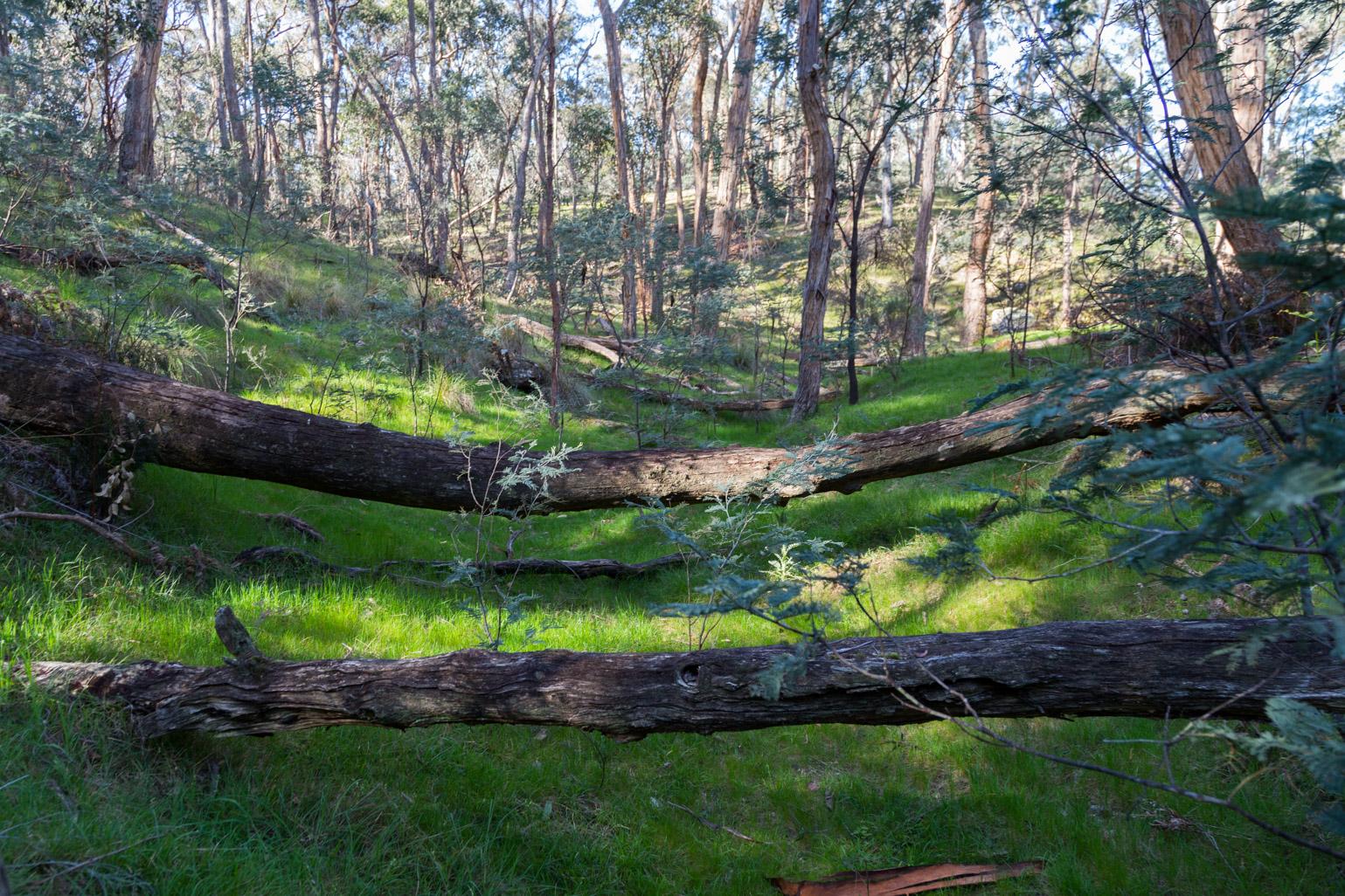 green-grass-fallen-trees