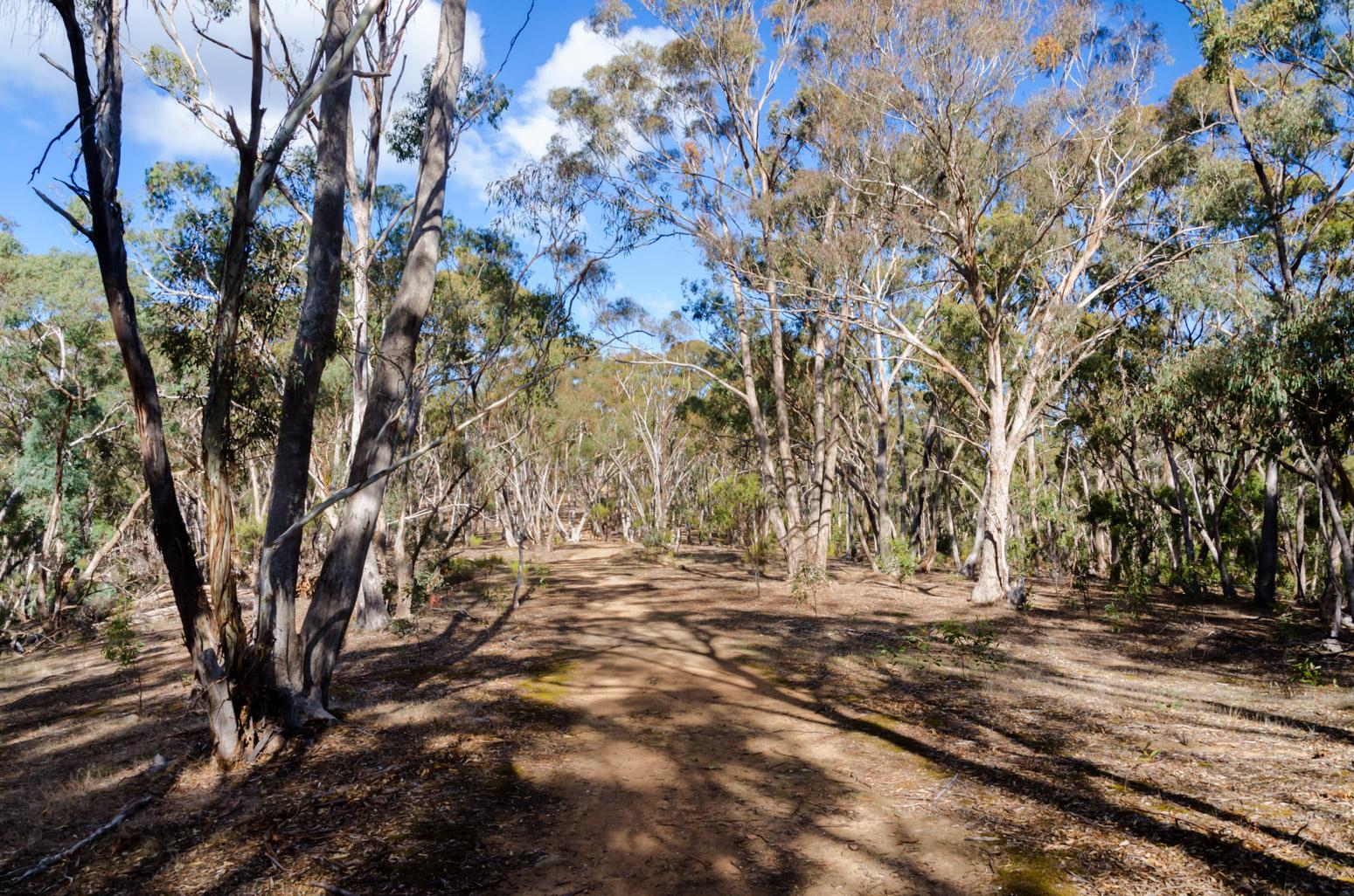 gurr-track-vaughan-goldfields-walk