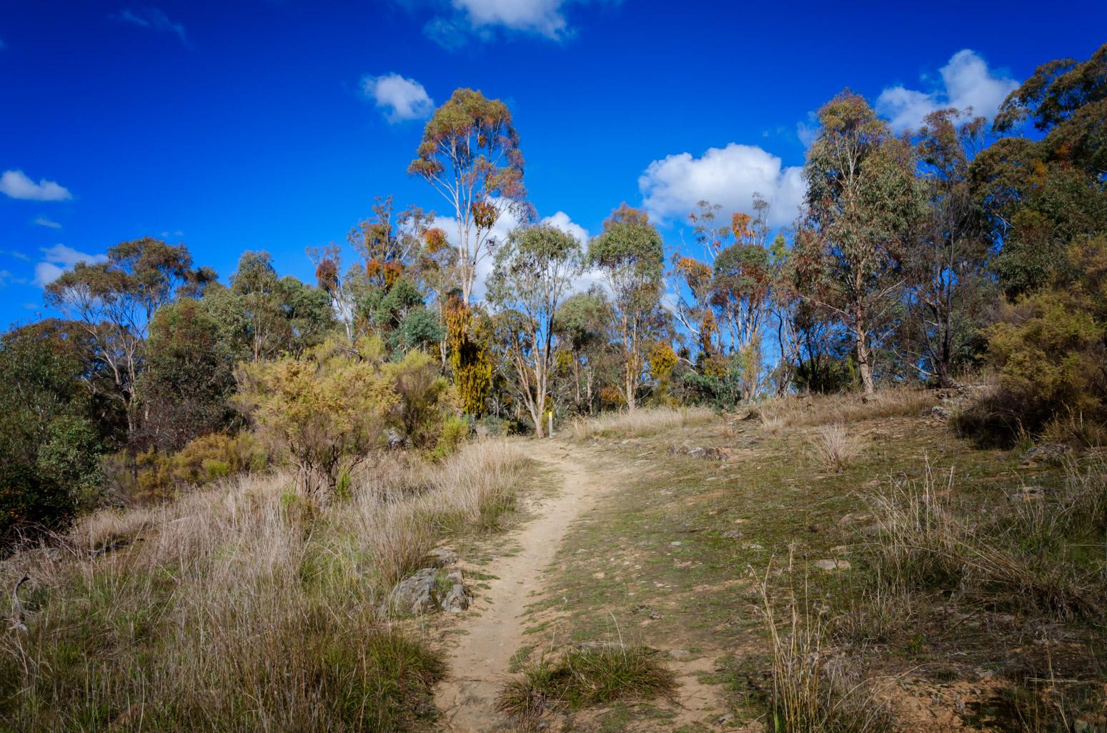 hill-gurr-track-vaughan-goldfields-walk