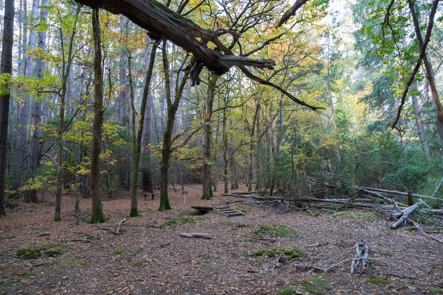 la-gerche-forest-walk-creswick