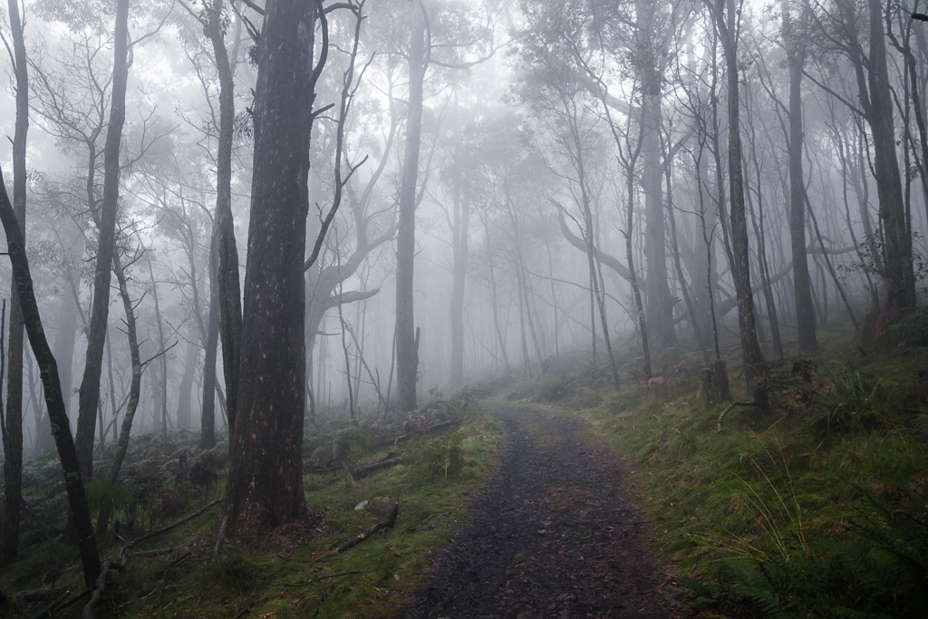 macedon-ranges-track-cloud