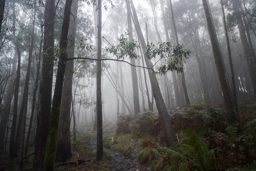 mist-in-trees-mt-macedon