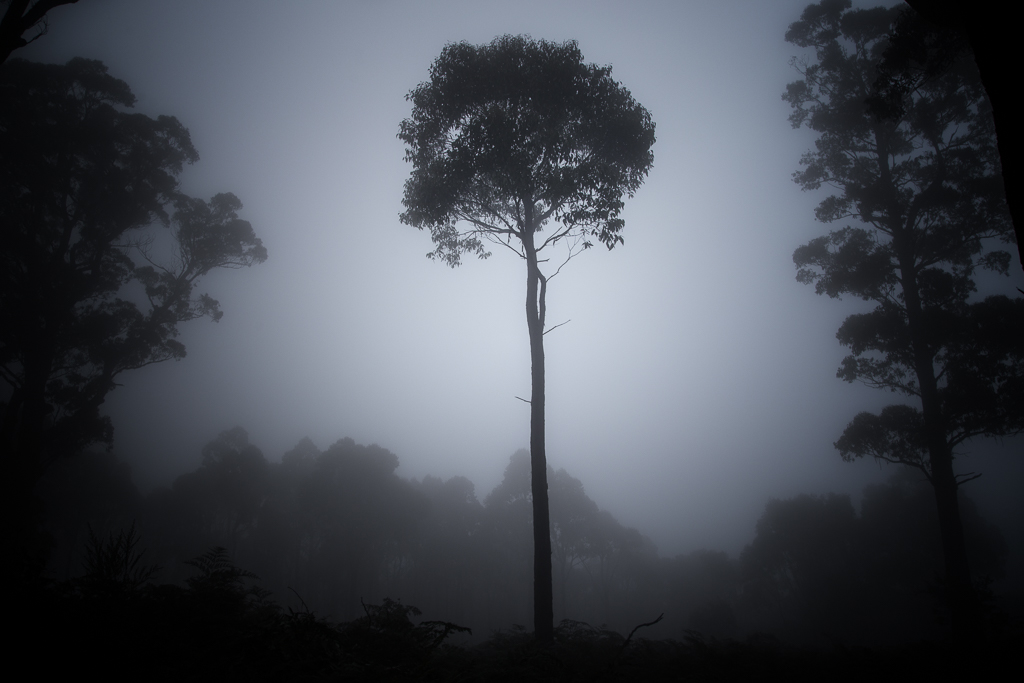 tree-in-cloud-mount-macedon
