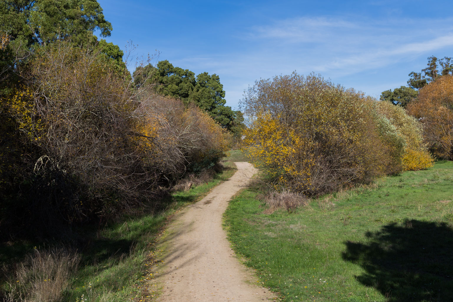 walking-track-creswick