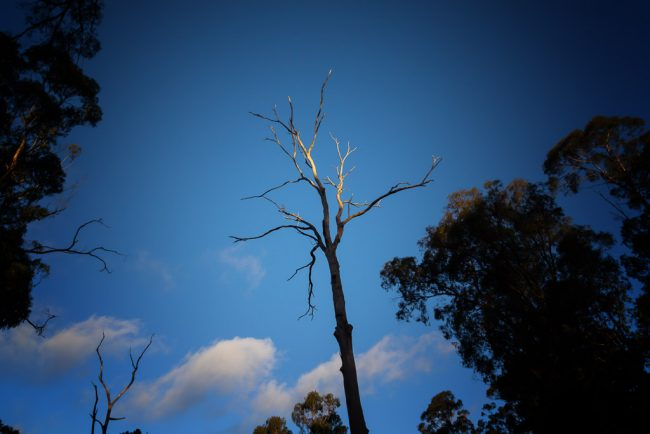 bare-tree-branches-blue-sky