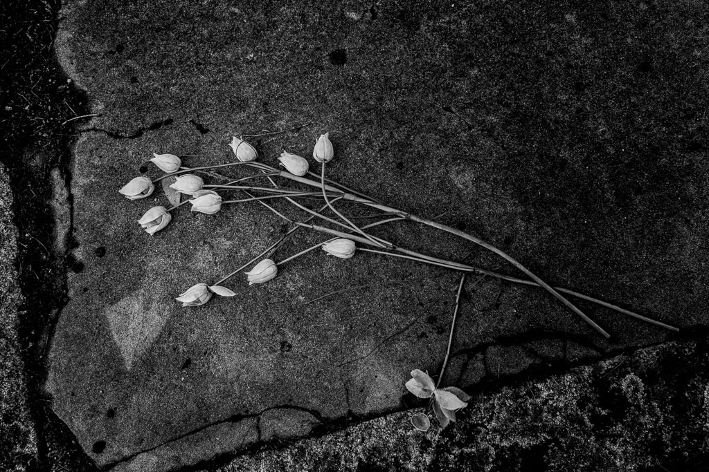 flowers-on-grave