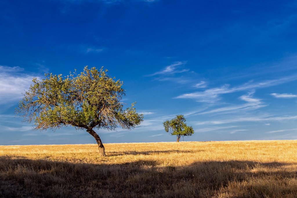 trees-paddock