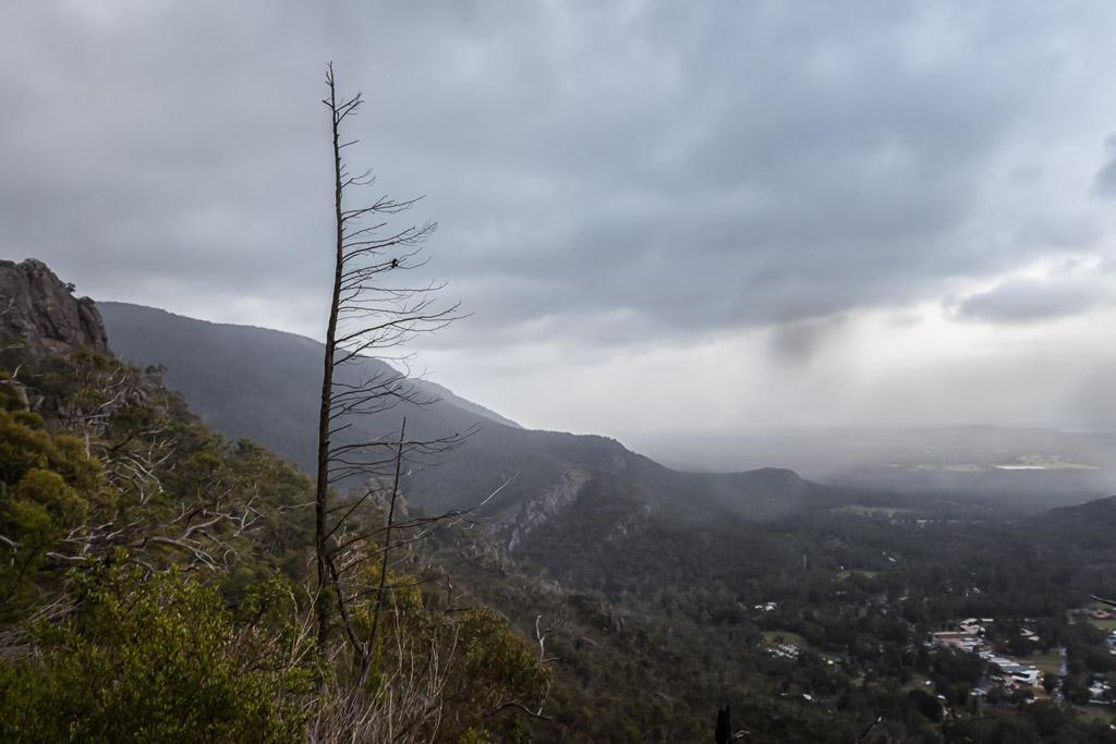 lone-tree-hillside-grampians