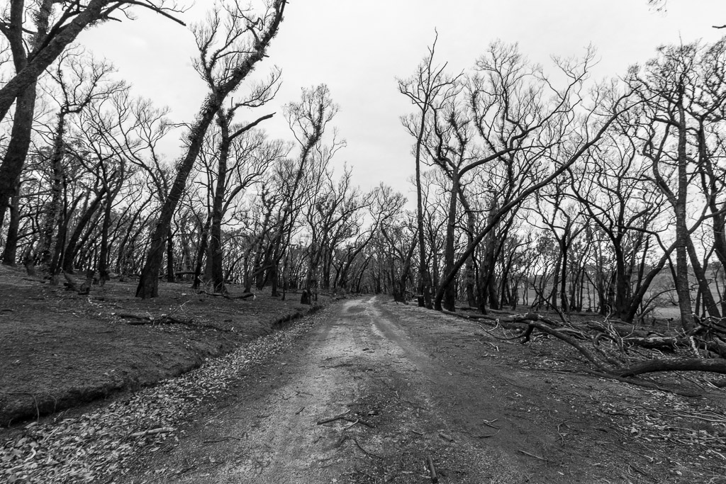 burnt-trees-next-to-walking-track-black-hill-reserve