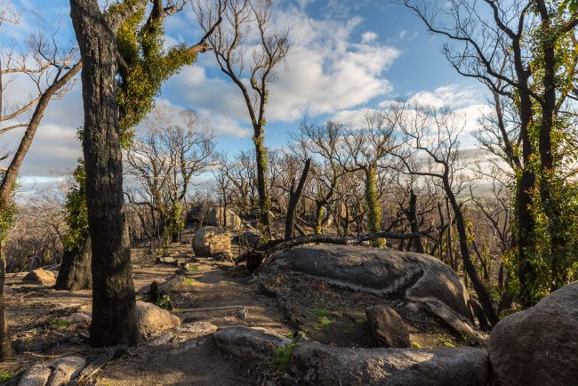 burnt-trees-rocks-ridge-track-black-hill