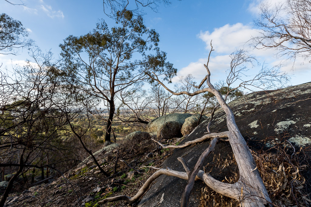 fallen-tree-boulder-black-hill-reserve