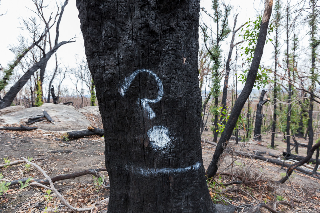 question-mark-on-burnt-tree-black-hill-reserve