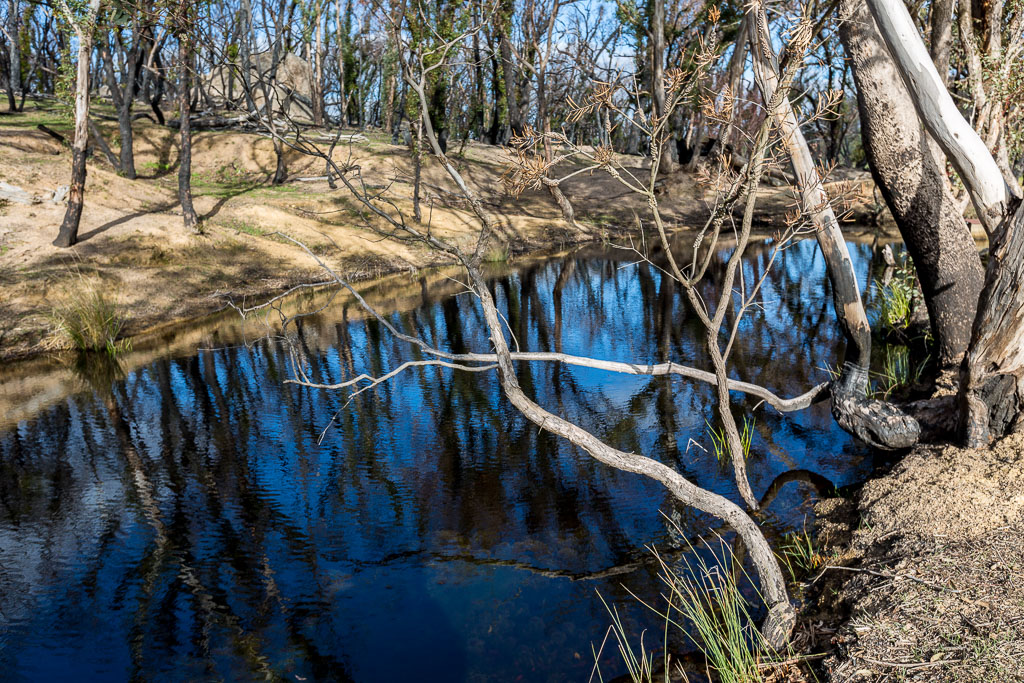 reflections-small-dam-black-hill-reserve