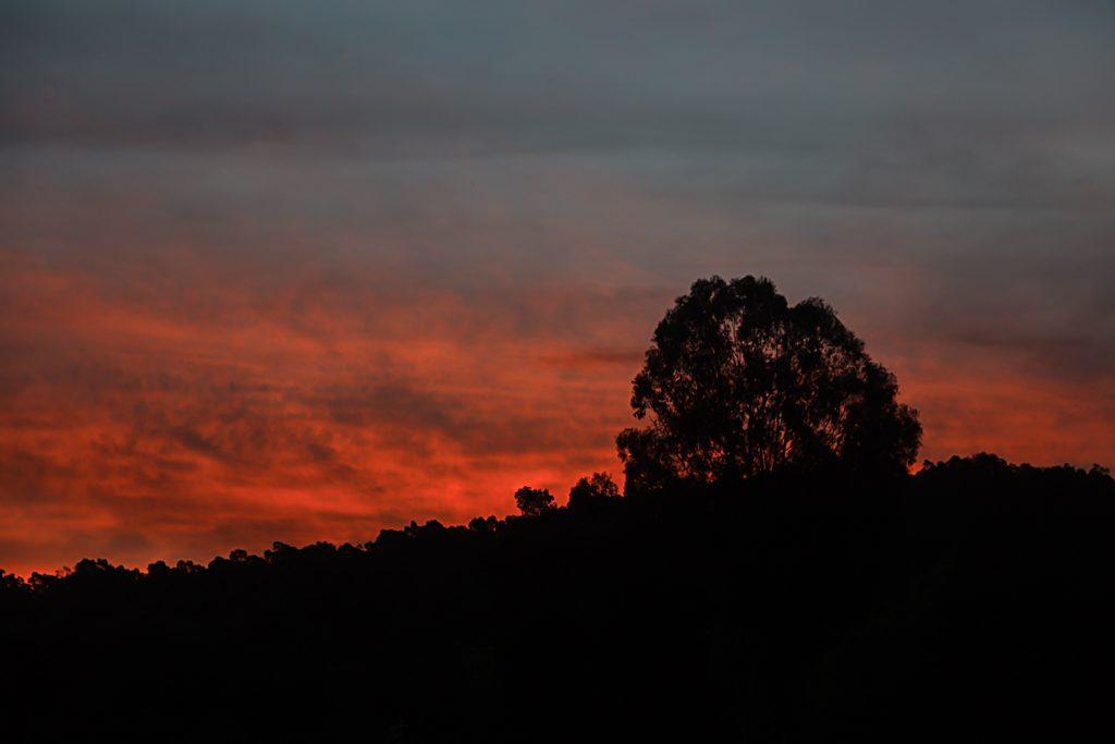 silhouette-tree-sunset